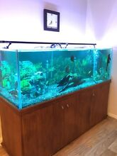 Fish tank package 6ft Sippy Downs Maroochydore Area Preview