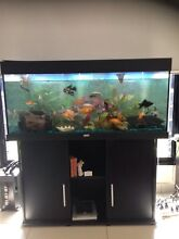 4ft Fish Tank Rosebery Palmerston Area Preview