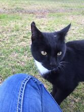 Sox a friendly cat free to good home Tahmoor Wollondilly Area Preview