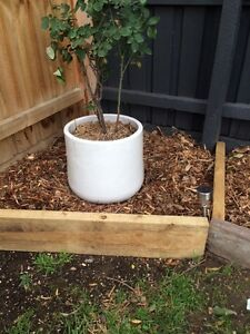 Bush Mulch delivered from $79 Heidelberg Heights Banyule Area Preview