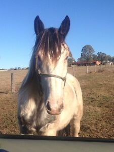 Gorgeous paint gelding Appin Wollondilly Area Preview