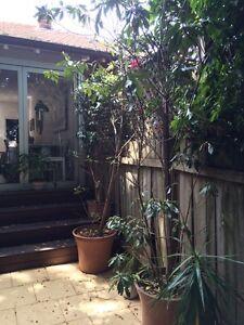 Plants for sale Mosman Mosman Area Preview