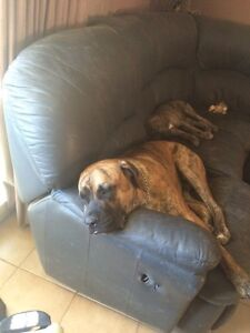 Chuck looking for love Parmelia Kwinana Area Preview