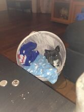 STOLEN DOG Girrawheen Wanneroo Area Preview