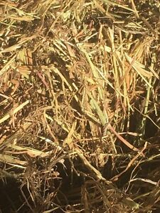 Ryegrass (pure) no weeds Hay small squares Ravenswood South Mount Alexander Area Preview