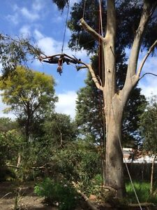 Bull on a TREE SERVICES Osborne Park Stirling Area Preview