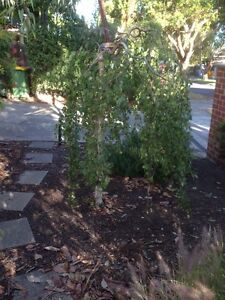 Gumtree Home And Garden Vic