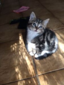 Kittens Tahmoor Wollondilly Area Preview