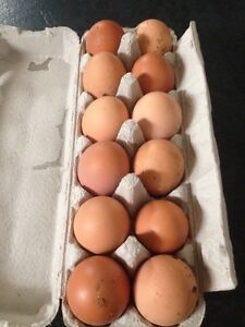 Organic eggs Casula Liverpool Area Preview