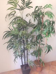 Fake plants / trees Moggill Brisbane North West Preview