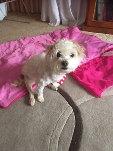 Bella needs a good home Hoppers Crossing Wyndham Area Preview