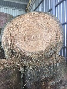 Oaten hay rounds for sale Cressy Colac-Otway Area Preview
