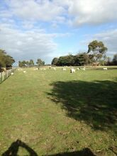 WANTED ANY UNWANTED LIVESTOCK  0 Catani Cardinia Area Preview