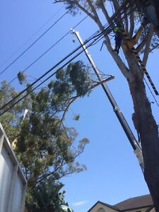 Tree service, tree lopping, chipping services, wood chipper Mosman Mosman Area Preview