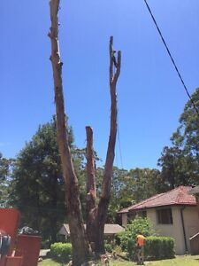 Over the top tree services FREE QOUTES! Merrylands Parramatta Area Preview