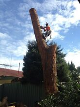 Contract climber Hinchinbrook Liverpool Area Preview