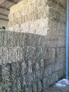 Hay bales of grass for party /bedding/mulch