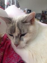 New home needed for nervous, affectionate cat Indooroopilly Brisbane South West Preview