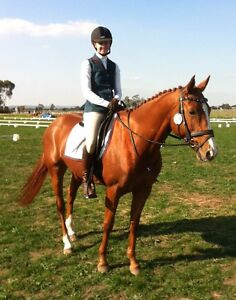 Great little all rounder horse The Gurdies Bass Coast Preview