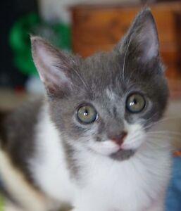 Rescue kitten -Hunter Valley Cat Haven Kurri Kurri Cessnock Area Preview