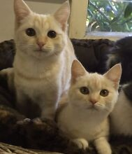 URGENT URGENT RESCUED SIBLINGS  CHAMPIGNON  AND CHANDY Riverwood Canterbury Area Preview