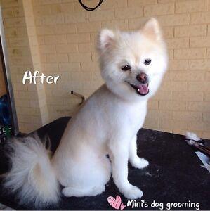 Mini's Dog Grooming Ellenbrook Swan Area Preview