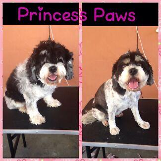 Princess Paws