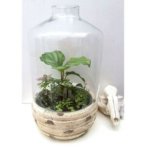 SALE - NEW Indoor Garden Terrarium with Many Plants Ferns & Succulents North Melbourne Melbourne City Preview