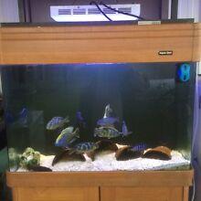 Fish tanks Lalor Park Blacktown Area Preview