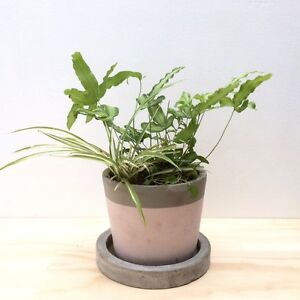 NEW Industrial Concrete Pot w/ 4 Types of Indoor Plants & Ferns North Melbourne Melbourne City Preview