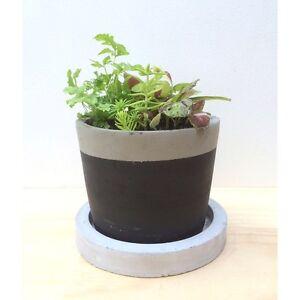 NEW Concrete Pot Plant Set w Healthy Indoor Ferns Sedum Rainbow Coleus North Melbourne Melbourne City Preview