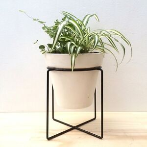 NEW White Ceramic Pot w Metal Stand Healthy 4 Types Indoor Fern Plants North Melbourne Melbourne City Preview