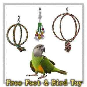 New Bird Toy Free Foot Hanging Swing Double Ring Playing Richlands Brisbane South West Preview