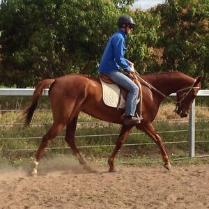 Great all rounder Airville Burdekin Area Preview