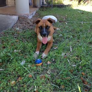 Dog Sitter Deception Bay Caboolture Area Preview