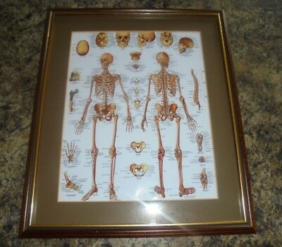 VINTAGE DOCTORS SKELETON CHART GERMAN MEDICAL