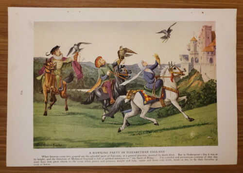 1920 HAWK Bookplate Art Print Painted by Louis Agassiz Fuertes - ng18