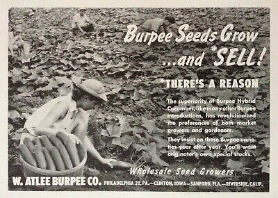 1954 AD(XE6)~W. ATLEE BURPEE CO. PHIL., PA. WHOLESALE SEED GROWER