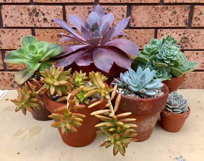 Succulents, Cacti, and ALL Plants Market  October 8th, 2017
