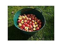 Apples Wanted, Unwanted Orchard Apples, Happy to Collect - Devon - Somerset