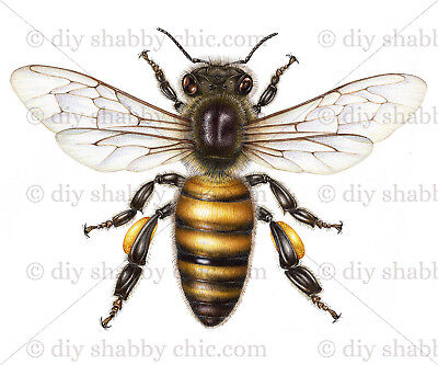 Furniture Glass Decal Image Transfer Vintage Antique French Labels Honey Bee Pot ()