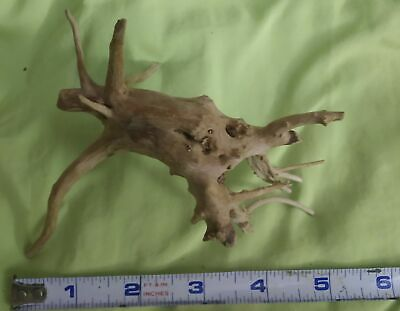 "5"" Spiderwood Aquarium Driftwood organic sw3"