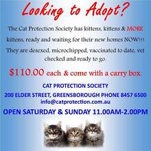 Looking to Adopt? We have Kittens available now!!! Greensborough Banyule Area Preview