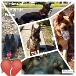 Treasures-to-Benefit-K9-Dogs