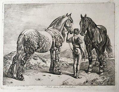 Johann Adam Klein. - Original Radierung. Black-horses from Lincolnshire. 1819