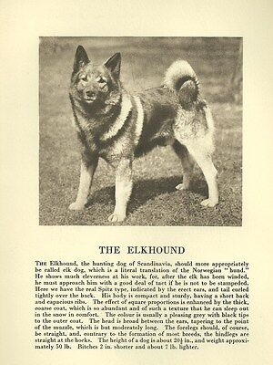 Norwegian Elkhound - 1931 Vintage Dog Print - MATTED