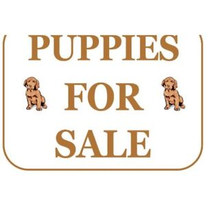 Looking For A Dog! Particular A French Bulldog!