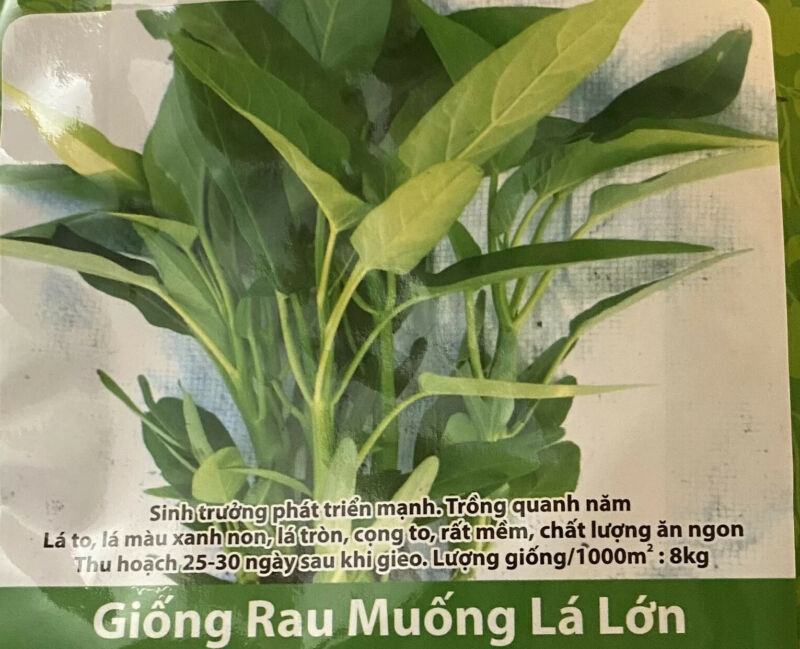 Hat Giong Rau Muong La Lon VN .  20grams  + FREE GIFT Rau Tần Ô Seeds.