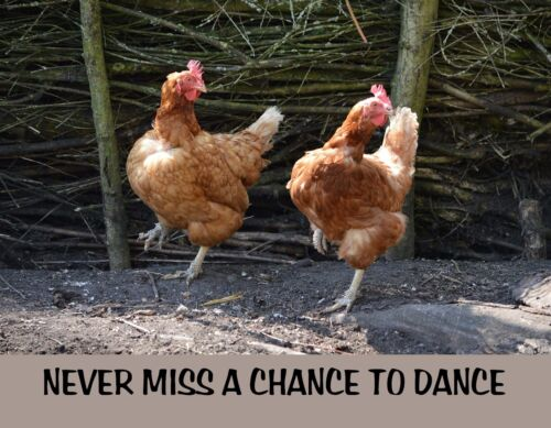 METAL REFRIGERATOR MAGNET Never Miss Chance To Dance Chicken Family Friend Humor