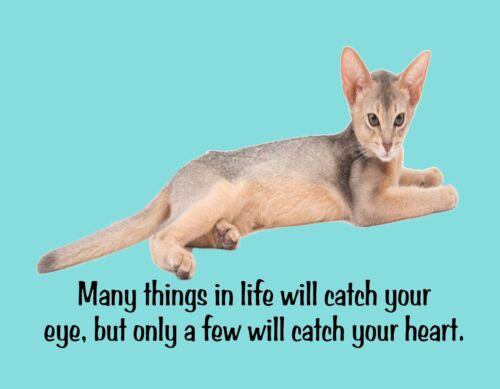 METAL REFRIGERATOR MAGNET Cat Things In Life Catch Eye Few Catch Heart Love